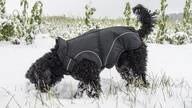 """LOGO_Winter Hundemäntel in Schwarz """"MATT"""""""