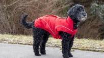 LOGO_Dog winter jacket in red
