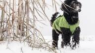 LOGO_Dog's rain jacket / all-year jacket in green