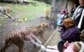 LOGO_New Generation Zoos