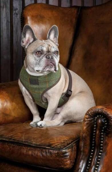 LOGO_Tweed Harness