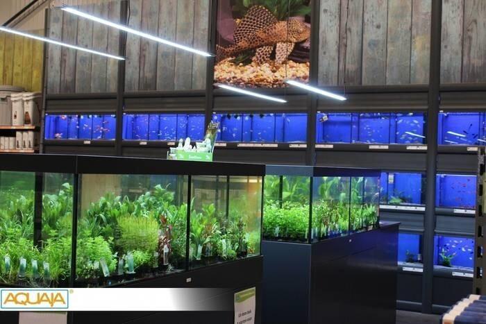 LOGO_Pflanzen Verkaufsanlagen