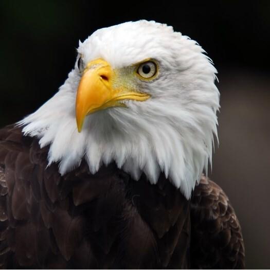 LOGO_Eagle Eye Security Checkup