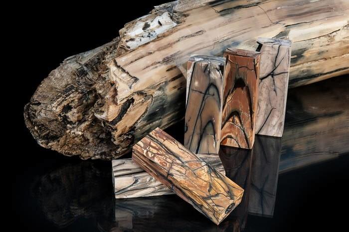 LOGO_Raffir Fossils