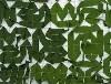 LOGO_Camouflage net Standart series
