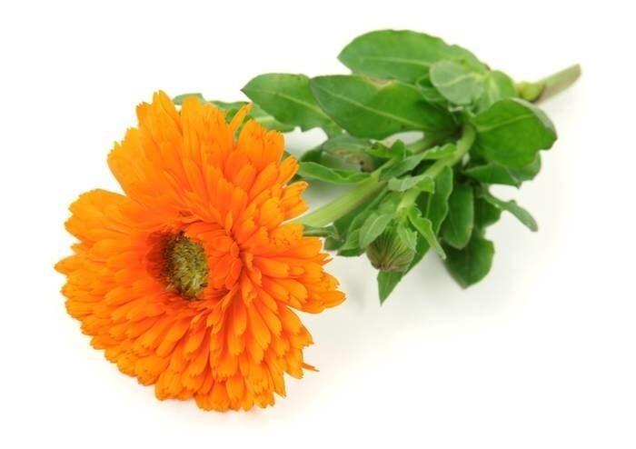 LOGO_Marigold Flower CO2-to extract (organic) < 0,1 % Carotenoides, DE-ÖKO-013, Type No. 018.014