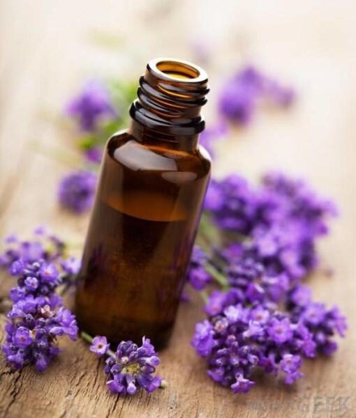 LOGO_Lavendel Öl Organische