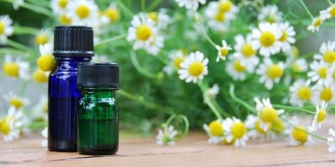 LOGO_Kamille Blüte / Kamillenblüten römisch Öl Organische