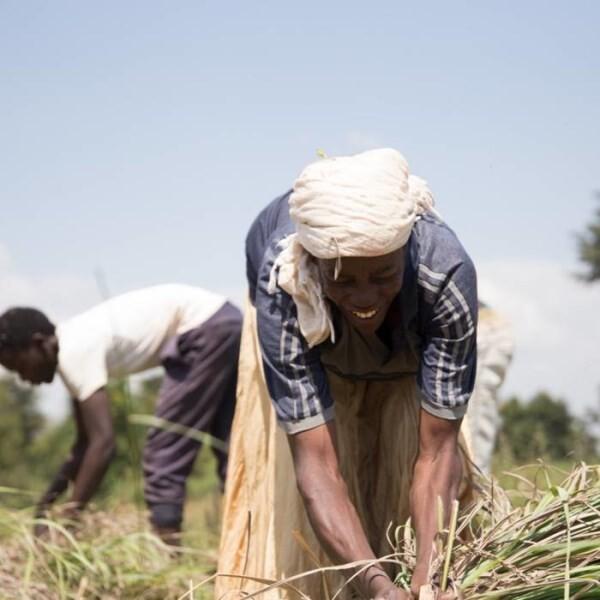 LOGO_Organic Essential Oils directly produced in France, Congo, Uganda ect..
