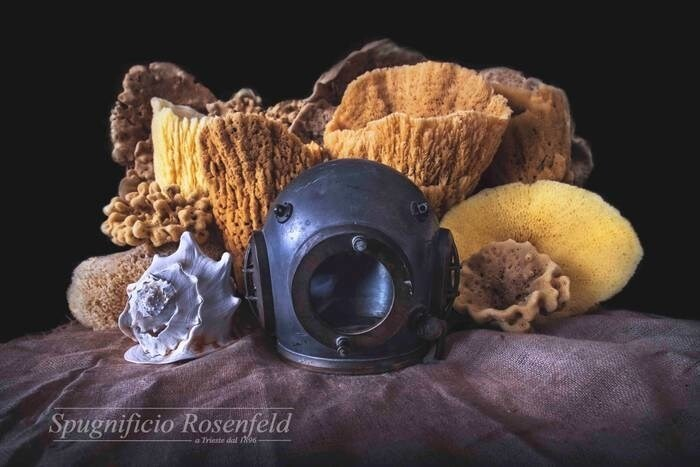 LOGO_Natural Sea Sponges for exposure/display
