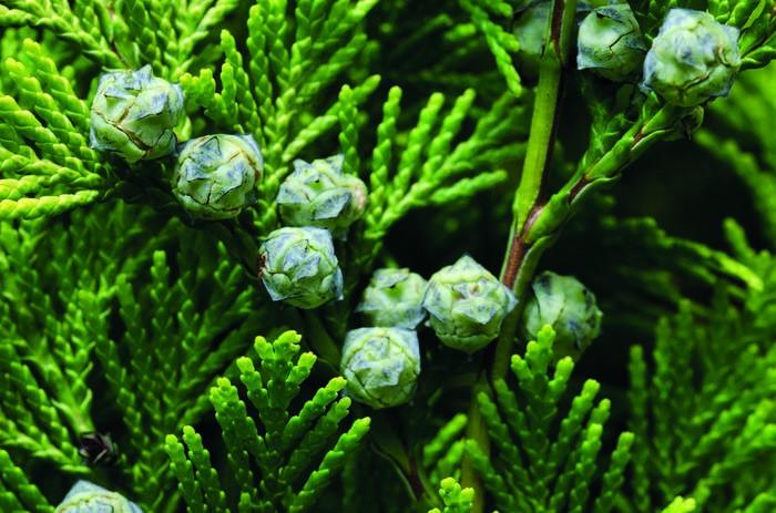 LOGO_Cypress Organic E.O.