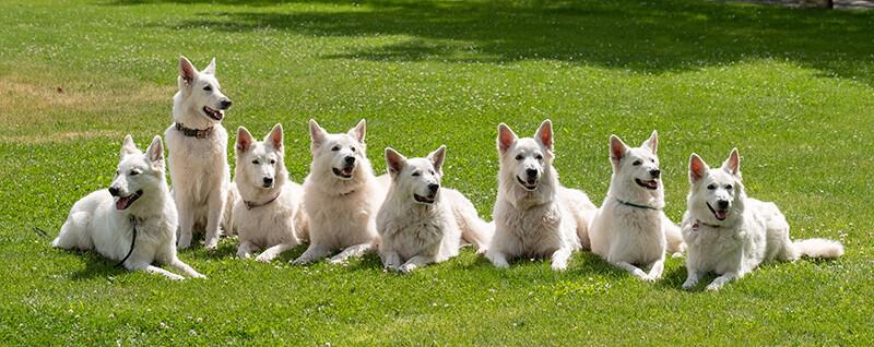hunde messe nürnberg