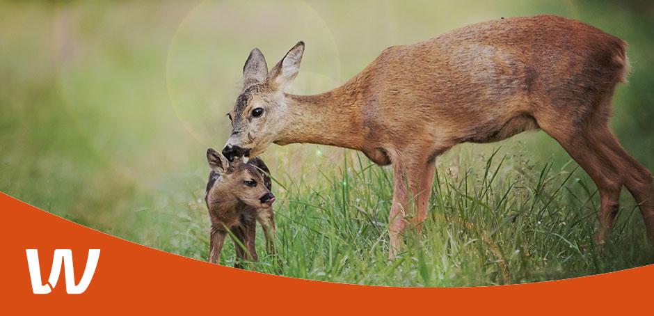 wildlife.fair - Das Event für Jagd und Natur